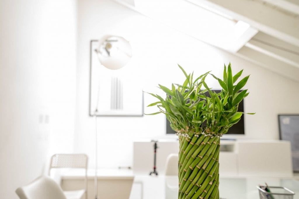 Photograph of a bamboo plant in a brightly lit reception room.
